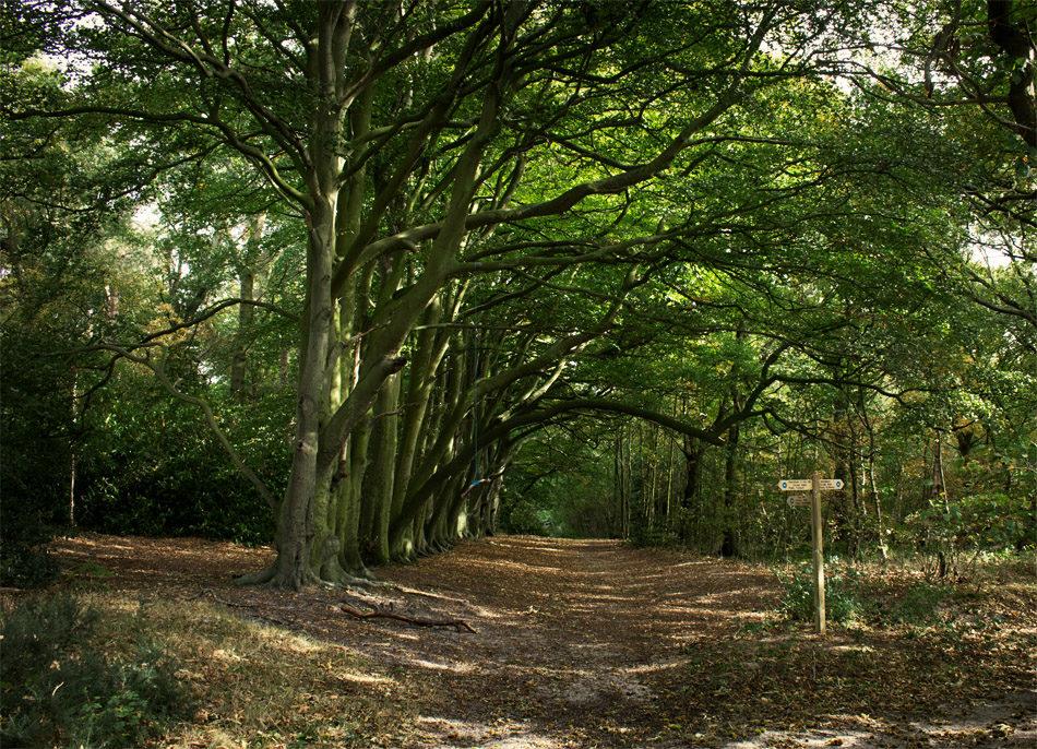The mixed woodlands of Snettisham