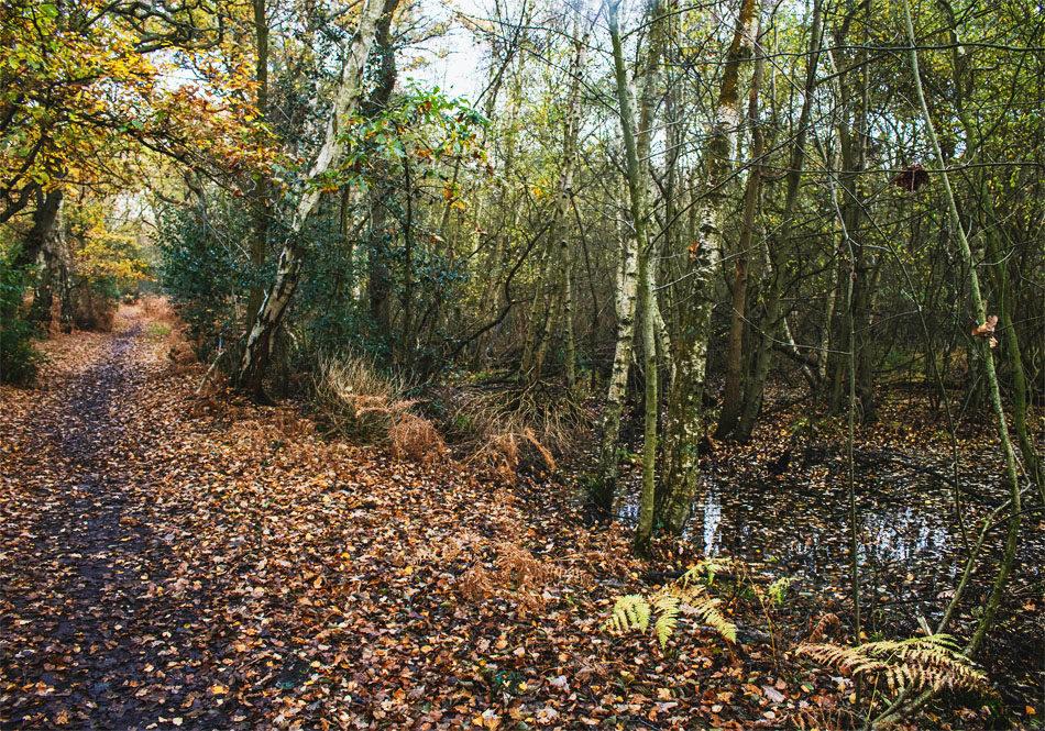 Woodland tracks along the Woottons walk.